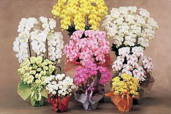 サムネイル:Flower seller MoRY'S